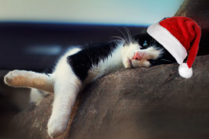 Süße Katze mit Wihnachtsmann Mütze liegt faul auf der Kante und ruht sich aus.